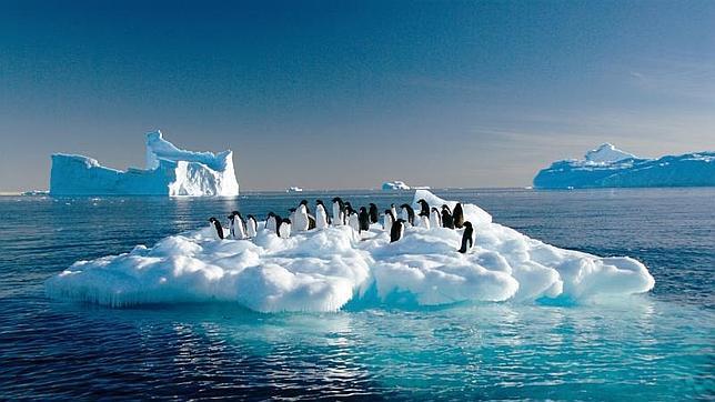 gripe-aviar-pinguinos-antartida--644x362